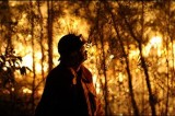 Ashes to ashes: aftermath of a bushfire