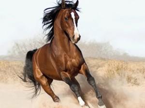 """Imagine no"" - Horse_ebooks (10/5/13)"