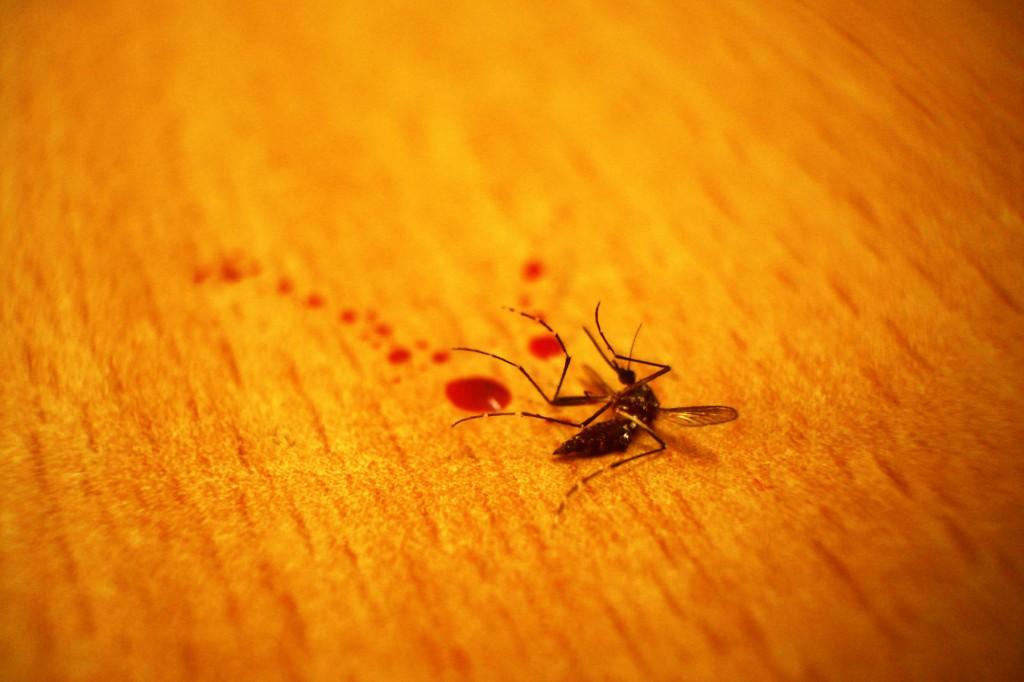 Dead_mosquito