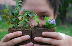Poster for Seedlings