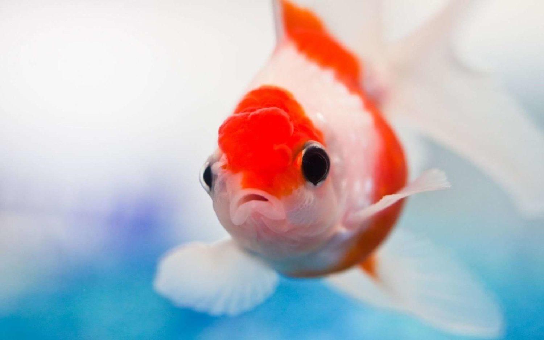 Aquarium Fish Hd Wallpaper Fish Hd Wallpaper Find Best Latest Fish