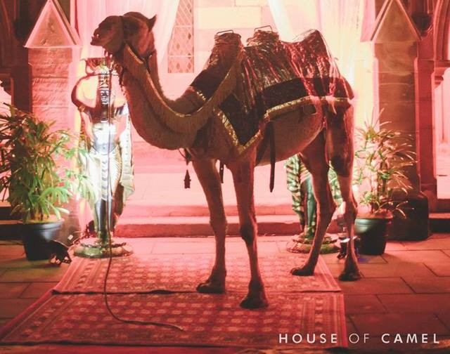 The camel from the event