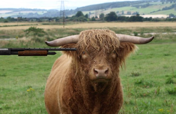 Picture of a bull with a gun to its head.