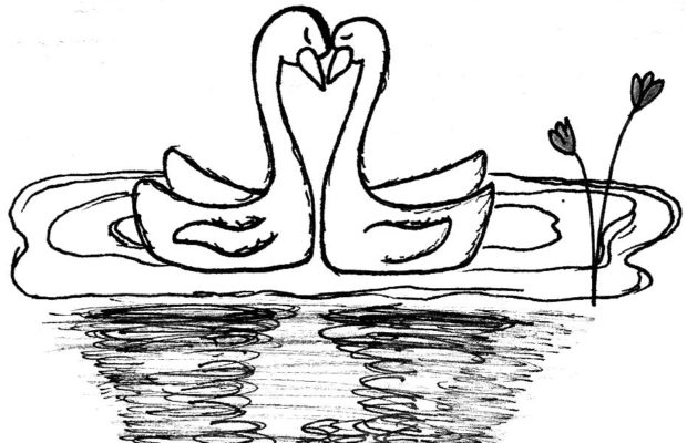 Drawing of swans embracing