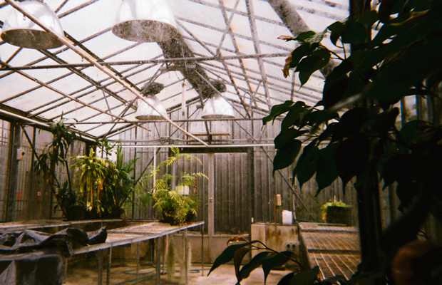 Photo of the greenhouse in Carslaw