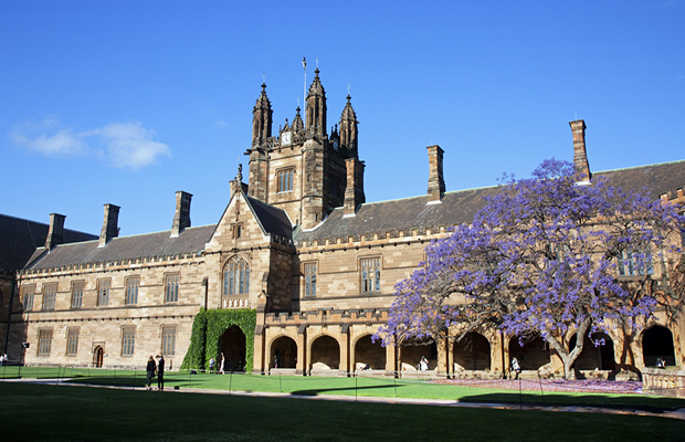 university quad on a sunny day with jacaranda tree in bloom