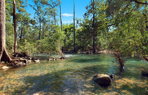 Alligator creek online