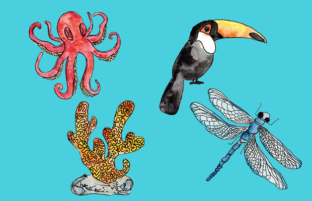 Watercolour images of an octopus, dragon fly, cora and toucan