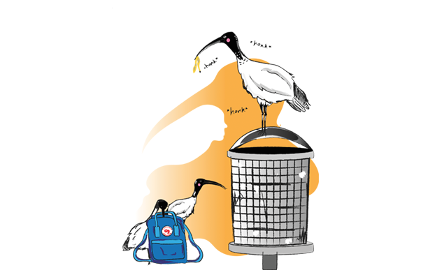 A cartoon drawing of two ibises, one on a bin, one behind a Kanken backpack.
