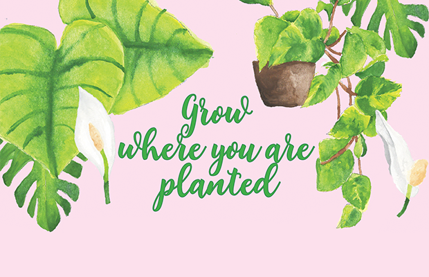 "Text reading 'Grow where you are planted"" on top of a pink background and an arrangement of leaves, flowers and a potplant"