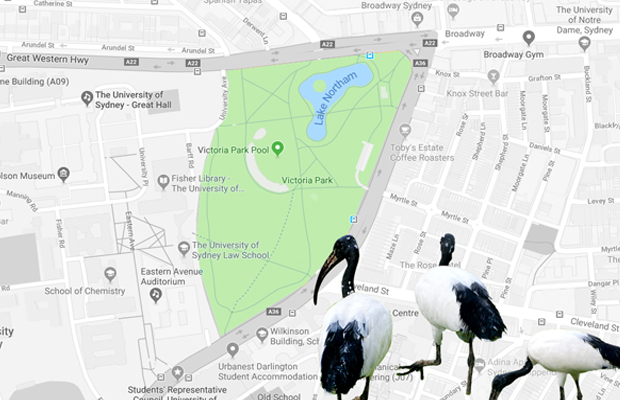 Map of Victoria park and surrounds with three ibises